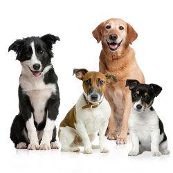 рубрика о собаках и щенках