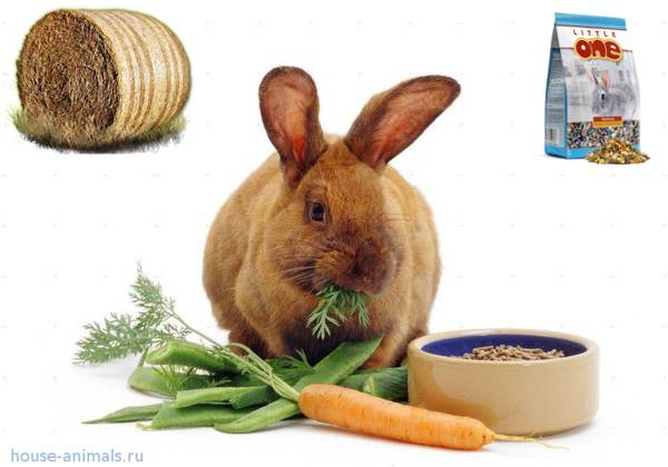 лучший корм для кролика - кормление кроликов