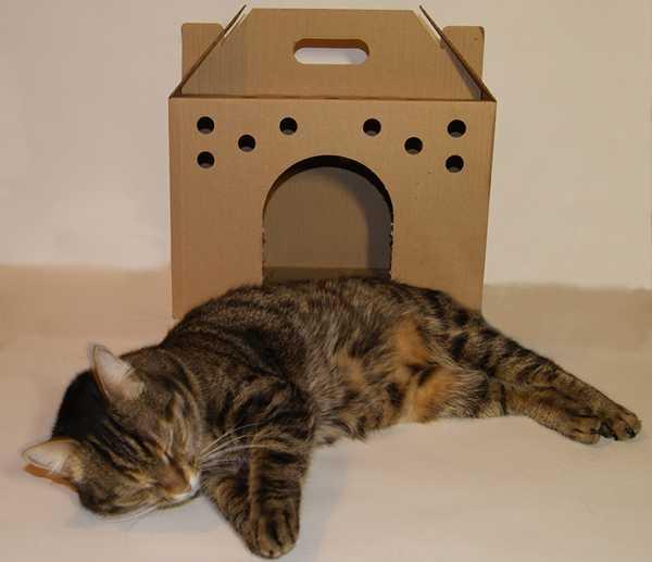 коробка для переноса кошки и котов