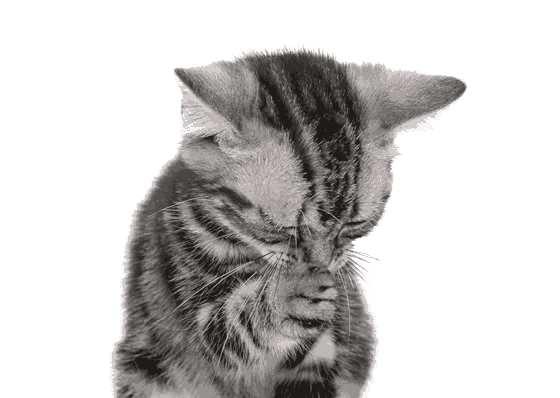 что делать если кот (кошка) чихает и кашляет