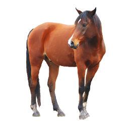 рубрика о конях