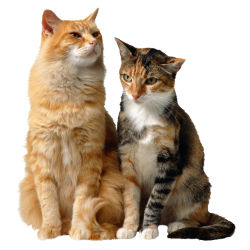 рубрика коты, кошки и котята