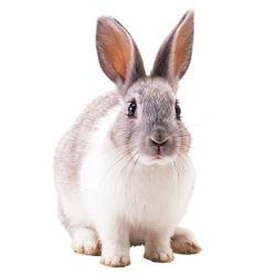 рубрика о кролиководство