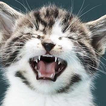 кошка чихает и слезятся глаза чем лечить в домашних условиях