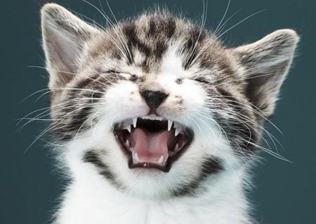 кошка чихает и слезятся глаза что делать