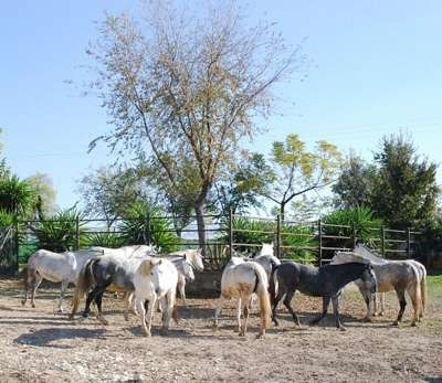 содержание андалузских лошадей фото