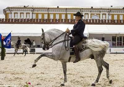 выступления лошадей андалузской школы верховой езды