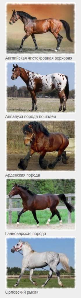 породы коней с фото и описанием