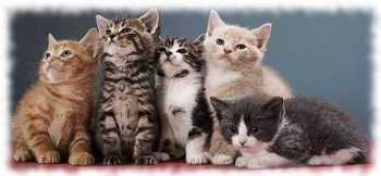 окрасы у кошек и рисунки на шерсти кошачьих