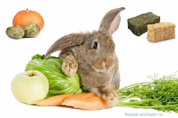 какой лучше  сочный корм для кроликов