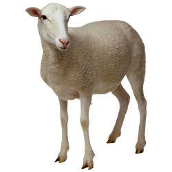 рубрика мелкий рогатый скот