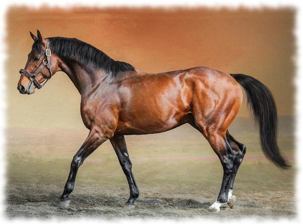 английская чистокровная верховая лошадь
