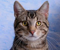 описание кошки (кошка фото) - список кошек по породам