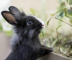 кролик содержание и фото породы кроликов