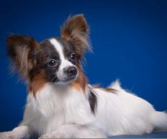 собаки домашние фото и описание