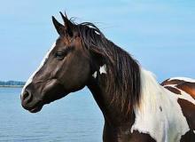 лошадь фото и описание