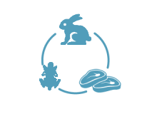 мясо-шкурковые породы кроликов