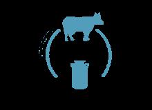 Породы молочного направления КРС