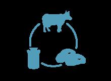 породы мясо-молочного направления крс