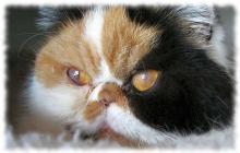 кератит у кошек фото симптомы и лечение