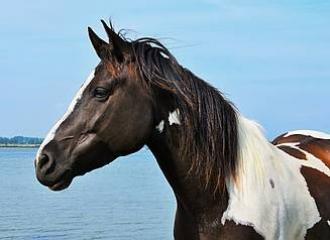 лошадь фото описание и картинка
