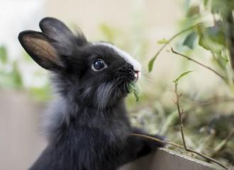 кролик содержание и фото кроликов