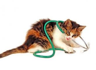 болезни дыхательной системы кошек и котов