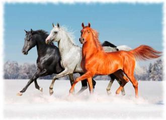 масти лошадей фото