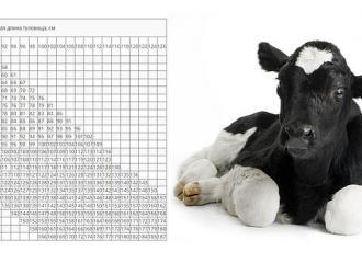 таблица измерения веса по телятам (молодняк крс) без весов
