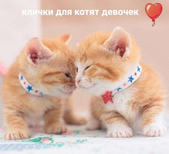 популярные клички для кошек